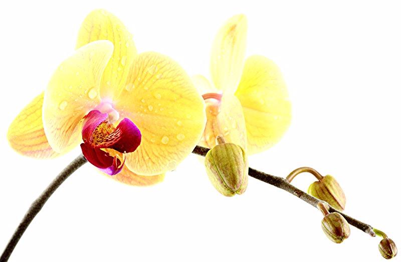 Kontakt Praxis Tuina & Qigong Massage