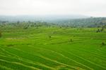 TCM-Studienreise Bali 2021 Bild 3